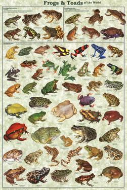 Frogs & Toads of the World Educational Poster