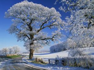 Frosted Tree at Roadside and Rural Winter Scene, Lincolnshire, England, United Kingdom, Europe