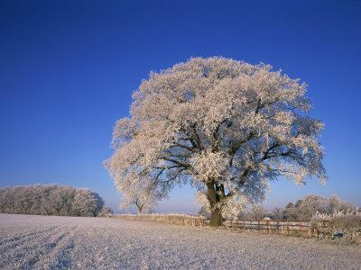 https://imgc.allpostersimages.com/img/posters/frosted-tree-in-rural-winter-scene-leicestershire-england-united-kingdom-europe_u-L-P7XEB00.jpg?artPerspective=n