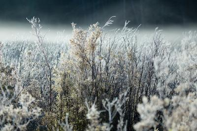 Frosty Sage Abstract IV, Grand Teton, Wyoming