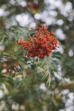 https://imgc.allpostersimages.com/img/posters/fruits-of-the-seabuckthorn_u-L-Q1EXRG50.jpg?artPerspective=n