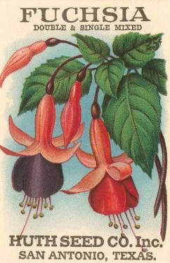 Fuchsia Seed Packet