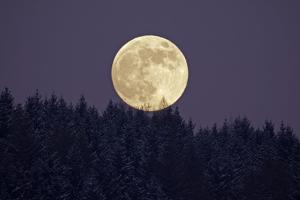 Full Moon Rising Above Forest in Winter