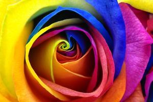 Rainbow Rose or Happy Flower by fullempty