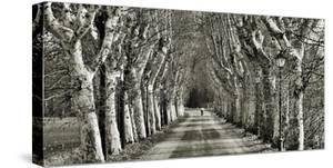 Come le foglie by Fulvio Ferrua