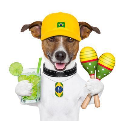 https://imgc.allpostersimages.com/img/posters/funny-dog-brazil_u-L-Q1039BF0.jpg?artPerspective=n