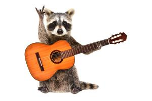 Funny Raccoon with Acoustic Guitar, Showing a Rock Gesture, Isolated on White Background