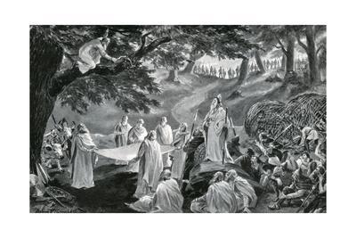 Druids Cut Mistletoe