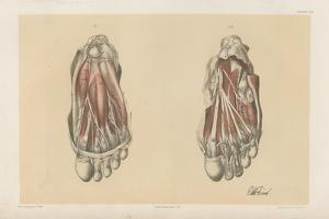 The Lower Limb. First and Second Stages in the Examination of the Sole of the Foot by G. H. Ford