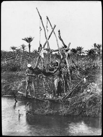 A Shaduf on the Nile, Egypt, C1890