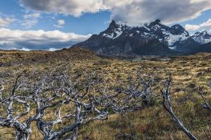 Dead Trees in Front of Cuernos Del Paine, Torres Del Paine National Park, Chilean Patagonia, Chile by G & M Therin-Weise