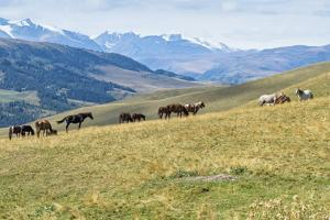 Horses, Ile-Alatau National Park, Tien Shan Mountains, Assy Plateau, Almaty, Kazakhstan, Central As by G&M Therin-Weise