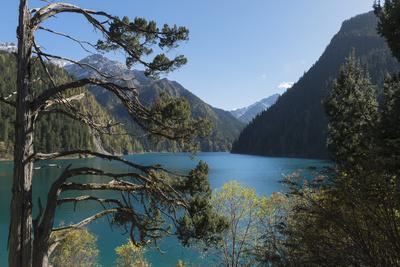 Long Lake, Jiuzhaigou National Park, UNESCO World Heritage Site, Sichuan Province, China, Asia