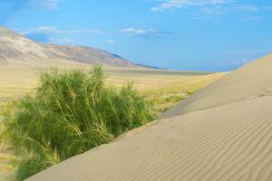 Singing Dunes, Altyn-Emel National Park, Almaty region, Kazakhstan, Central Asia, Asia by G&M Therin-Weise