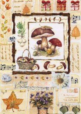 Mushroom Melody by G.p. Mepas