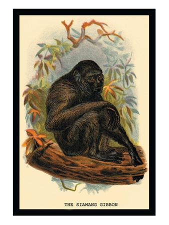 The Siamang Gibbon