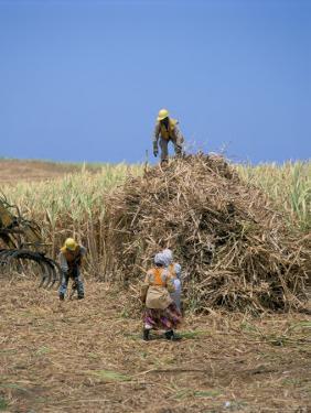 Harvesting Sugar Cane, Mauritius, Indian Ocean, Africa by G Richardson