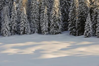 The Forest Rests under the Blanchet of Snow, Alpi Carniche , Friuli-Venezia Giulia, Carnia , E
