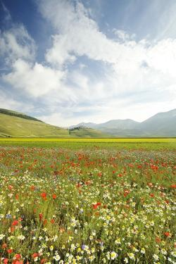 The Spontaneous Flowering Makes Plans Castellucio Norcia a Show Not to Be Missed, Parco Nazionale M by Gabriele Bano