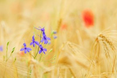 The Spontaneous Flowering Makes Plans Castellucio Norcia a Show Not to Be Missed, Parco Nazionale M