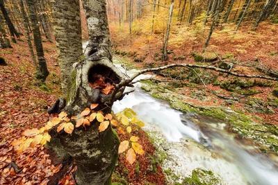 The Wood Takes on the Warm Colors of Autumn, Prealpi Carniche , Friuli Friuli-Venezia Giulia, Carni