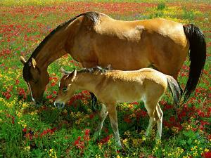 Horse and Foal Grazing by Gail Dohrmann