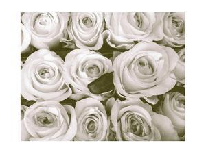 Rose in Bloom by Gail Peck