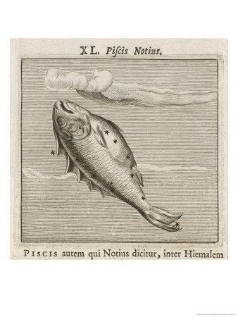 Piscis Notius