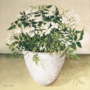 White Jasmine by Galley