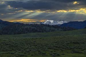 Lamar Valley Sunrise by Galloimages Online