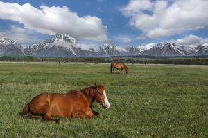 Teton Horses by Galloimages Online