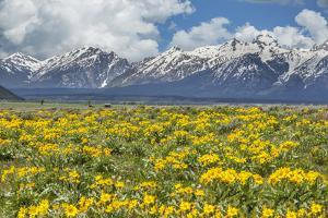 Wild Flowers with Mountains by Galloimages Online