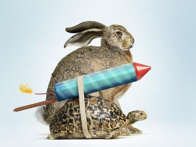 Tortoise and Hare by Gandee Vasan