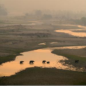 Elephants Crossing River by Ganesh H Shankar