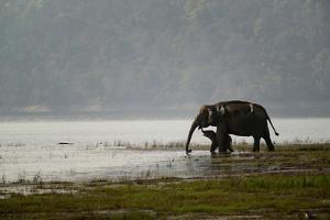 Elephants in Water by Ganesh H Shankar