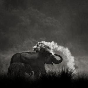 Mud Bath by Ganesh H Shankar
