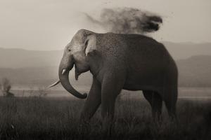 Tusker in Rain by Ganesh H Shankar