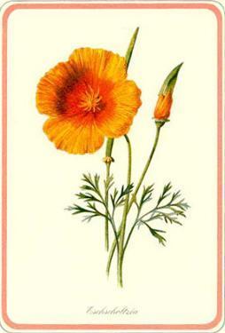 Garden Flowers XI