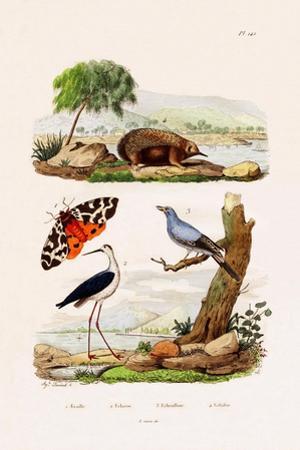 Garden Tiger, 1833-39