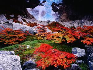 Autumnal Foliage Beneath the Glacier Piedras Blancas by Gareth McCormack