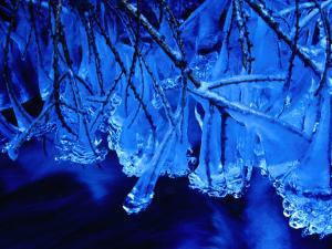 Icicles on Branches, Ireland by Gareth McCormack