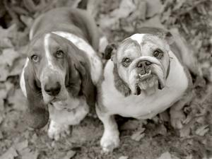 Two Dogs Looking Up by Gareth Rockliffe