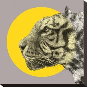 Wild 1 by Garima Dhawan