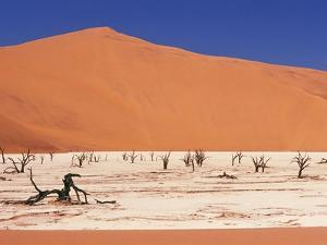 Dead Tree Skeletons and Cracked Clay Surrounded by Sand Dunes, Dead Vlei, Namib-Naukluft National P by Garry Black