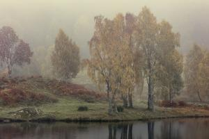 Autumn colour along the shore of Loch Tummel with mist lingering in the valley, Scottish Highlands, by Garry Ridsdale
