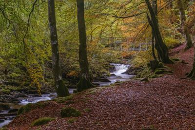 Autumn in the Birks of Aberfeldy, Scottish Highlands, Scotland, United Kingdom, Europe by Garry Ridsdale