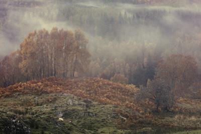 Autumn mist rolls through the River Tummel valley near Pitlochry in the Scottish Highlands, Scotlan by Garry Ridsdale