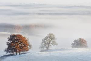 Fog flows around the trees of Delamere Forest with autumn colour and frost on the Cheshire plain, C by Garry Ridsdale
