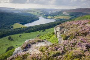 Summer heather in full bloom along Bamford Edge above the Ladybower Reservoir in the Peak District by Garry Ridsdale