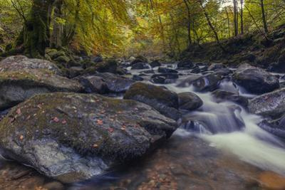 The Moness Burn flowing through the rocks within the Birks of Aberfeldy in autumn, Perthshire, Scot by Garry Ridsdale